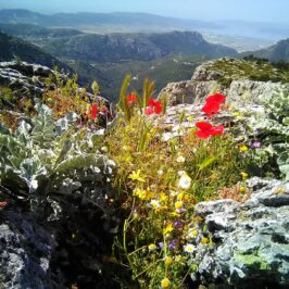 Parnitha mt in Athens Greece in spring