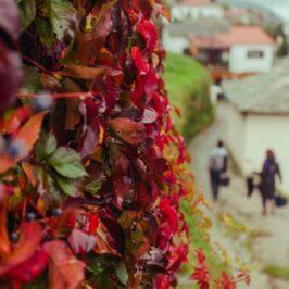 fall leaves people walking in Pelion Mt